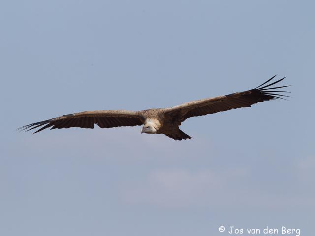 Vogels Ethiopië